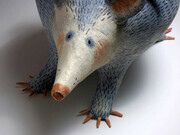 Possums (detail)